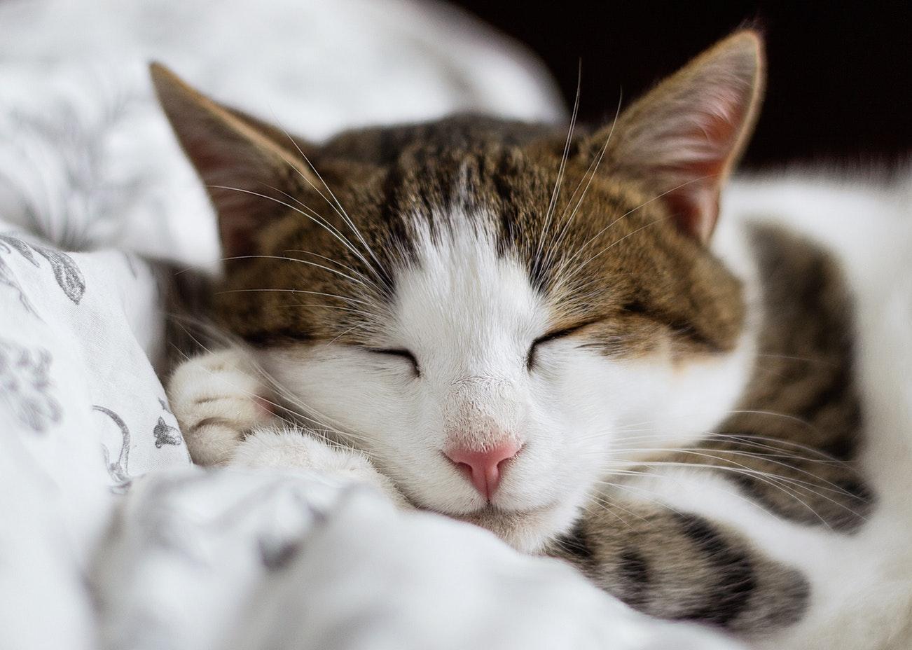 が 音楽 猫 寝る